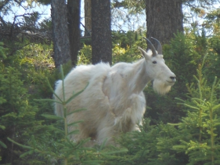 tiere-2
