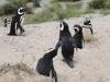 pinguinfamilie1