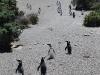 pinguine12