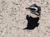 pinguine16