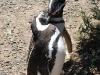 pinguine5