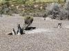 pinguine7